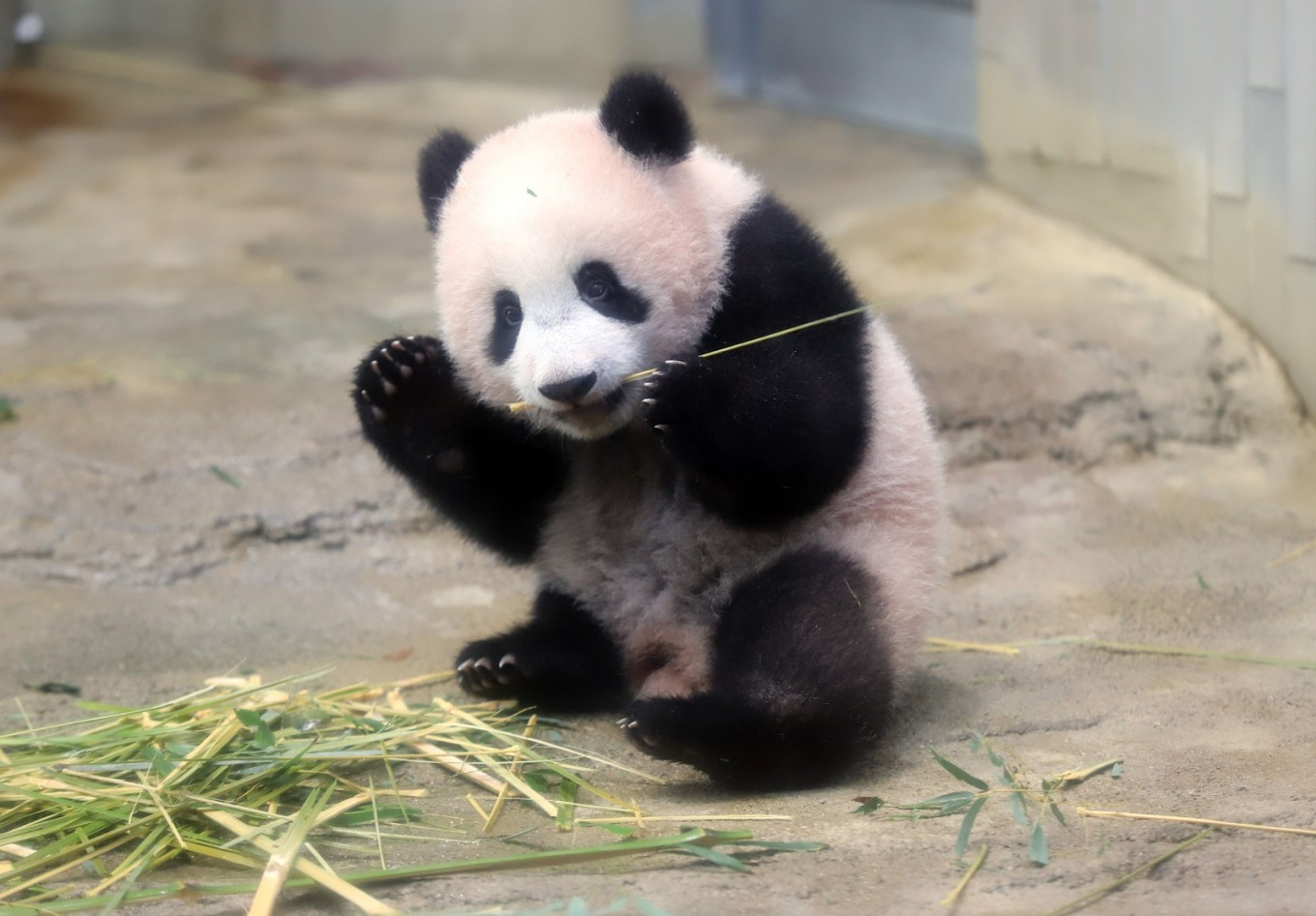 Oh How Cute Tokyo Crowds Flock To See Baby Panda On First Day Lifestyle The Jakarta Post
