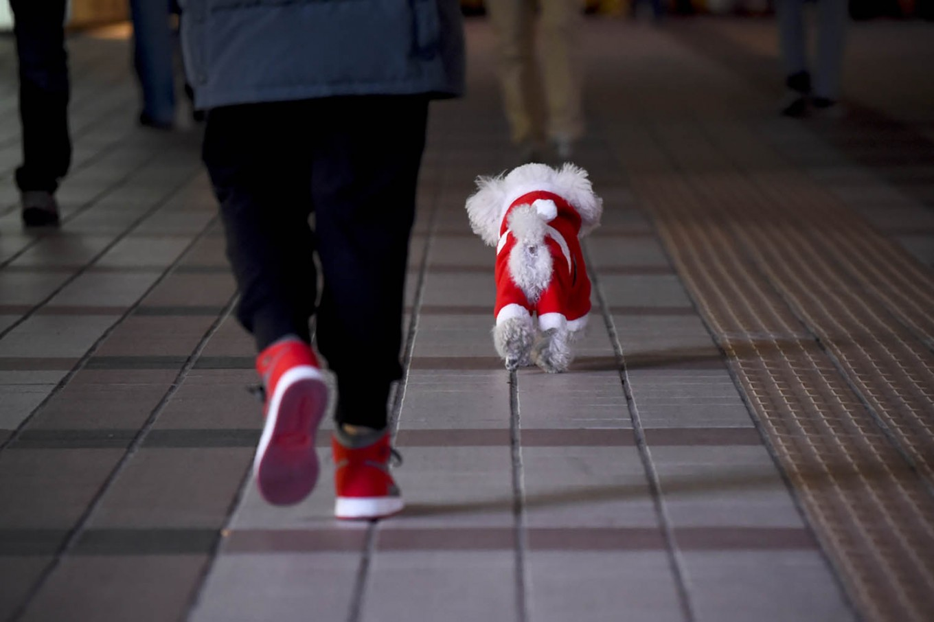A dog dressed in a Christmas costume and its owner walk along a street in Beijing on December 24, 2017. AFP/Wang Zhao