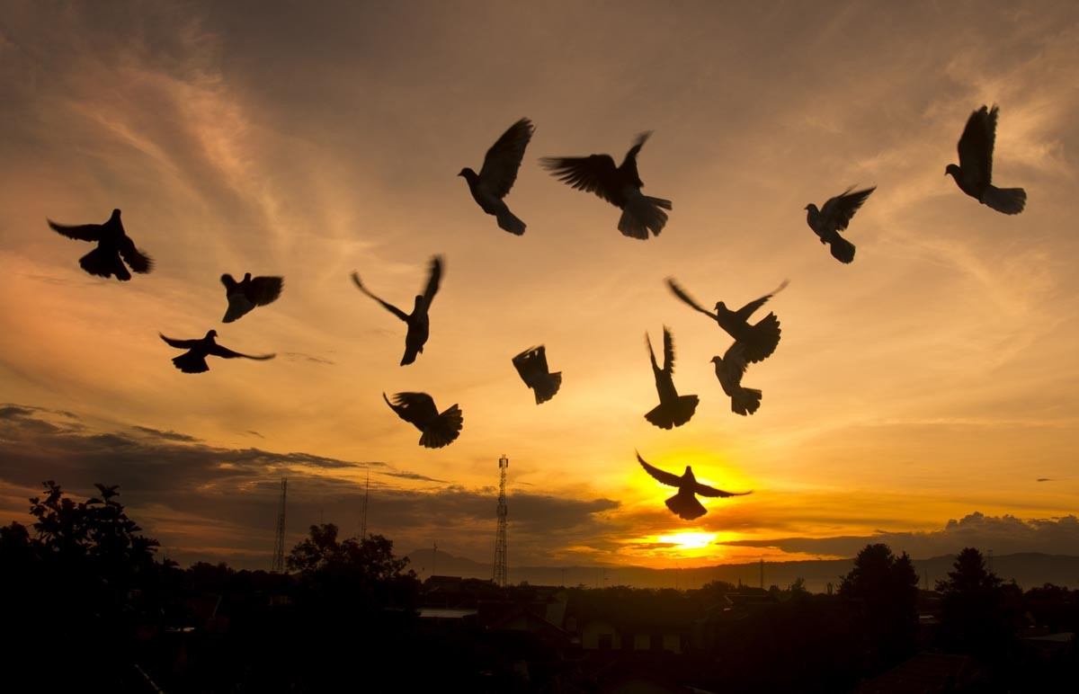 High hopes:Pigeons take flight as the sun rises in the Pegunungan Seribu area in Yogyakarta on Monday. Political tensions are expected to continue with Indonesia to have 171 regional elections in 31 provinces this year. JP/Tarko Sudiarno