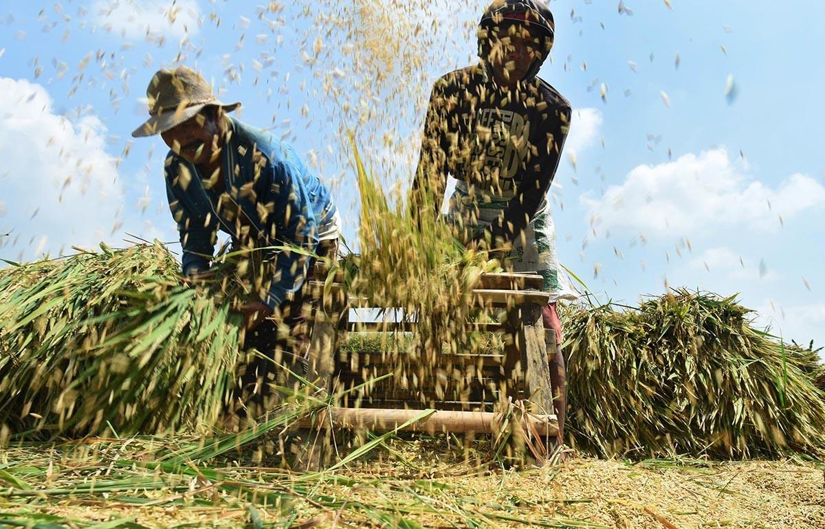 Credible rice data matters