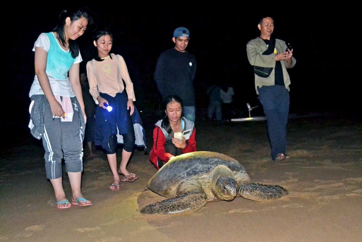 Departure: Tourists accompany a female turtle leaving her nests after laying eggs to return to the sea. Torchlight is only allowed to be directed on their back or sides, as shining torchlight on their eyes could cause blindness because of their high sensitivity to light.