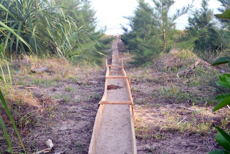 Into the wild: Channels are created to connect the relocation site with the edge of the beach as a natural pathway for the young turtles.