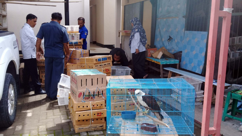 Authorities thwart smuggling of 29,000 Sumatran birds