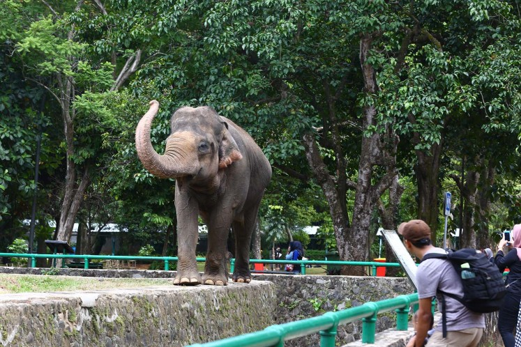 Ragunan zoo is home to several elephants.