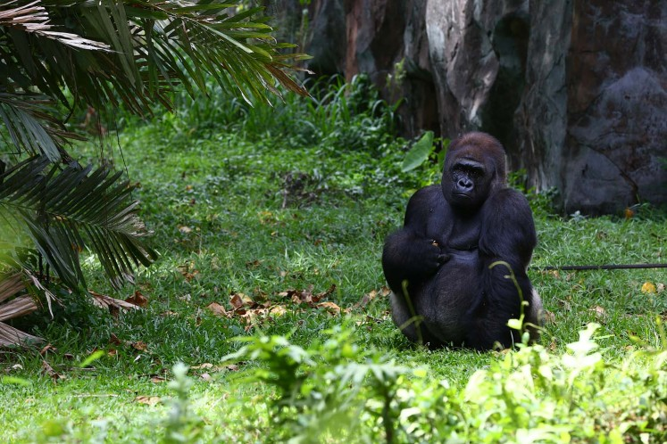 The Schmutzer Primate Center is home to several gorillas.