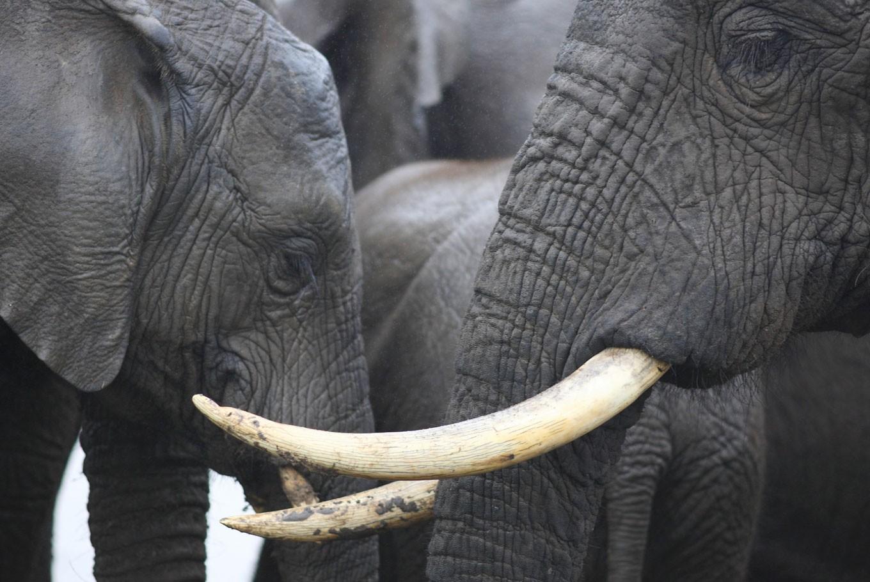 Thai police arrest 'kingpin' in Asian wildlife trafficking