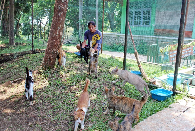 Dig in: Shelter worker Suhartono feeds the stray cats.