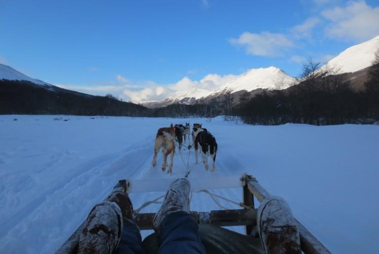 Mush, mush: On a dog-pulled sled in Ushuaia