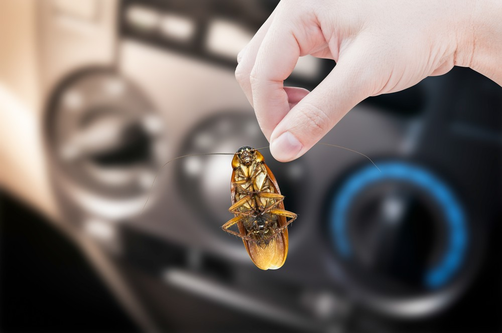 How to prevent cockroaches in cars