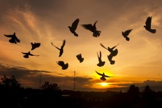 Pigeons take flight as the sun rises in the Pegunungan Seribu area in Yogyakarta on Monday, January. 1. Political tensions are expected to continue with Indonesia to have 171 regional elections in 31 provinces this year. JP/Tarko Sudiarno