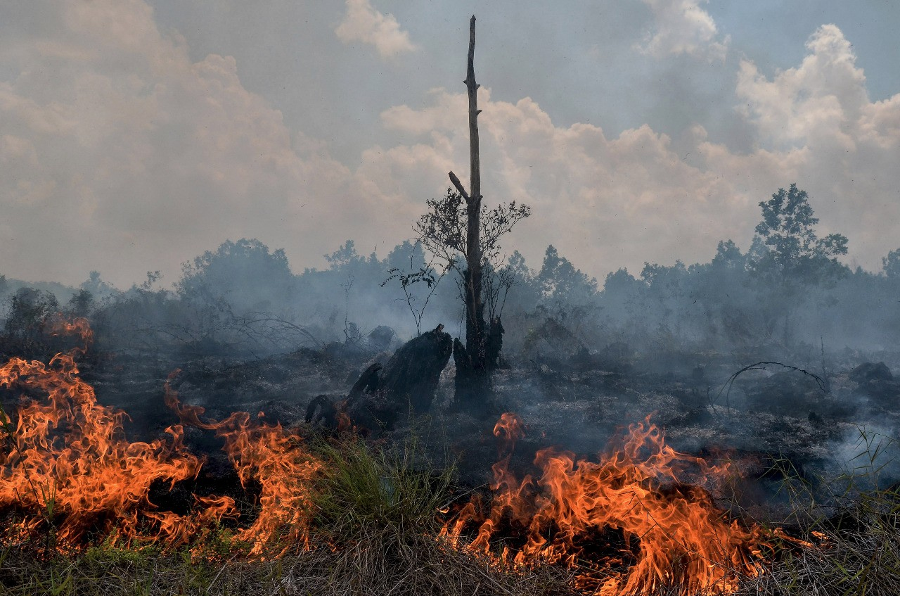 More land, forests burned down in Jambi