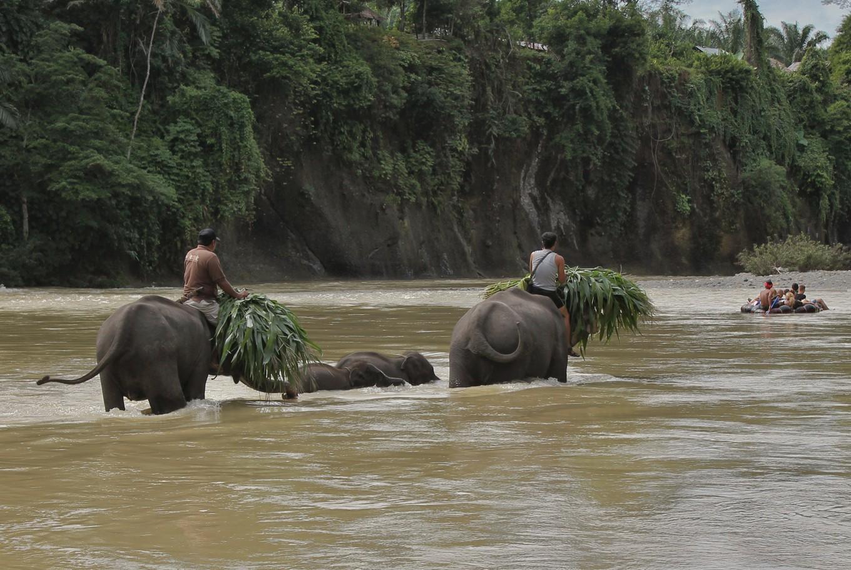 Elephants in Sumatra