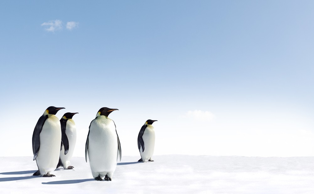Work among the penguins? France is looking for candidates