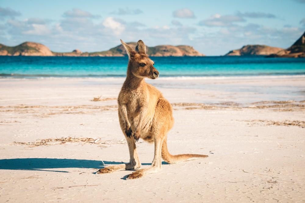 Australia tourism industry under climate change threat: Study