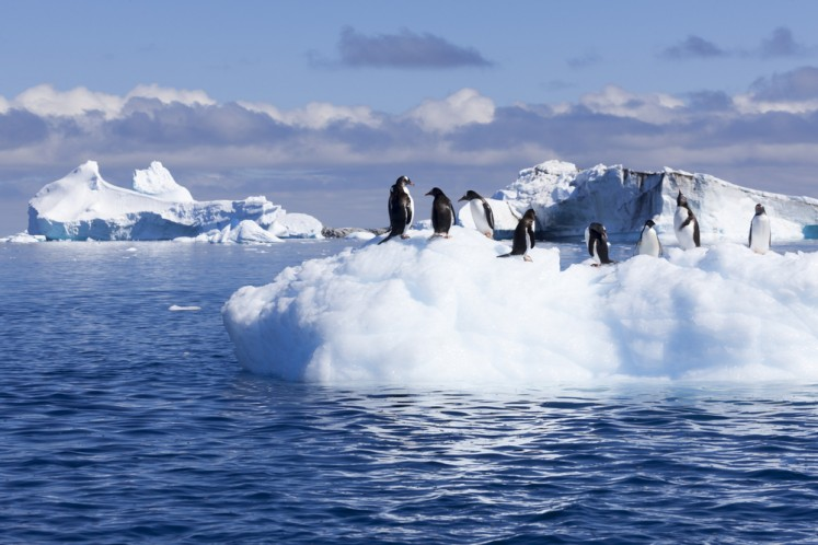 China to release do's and don'ts as more Chinese tourists visit Antarctica