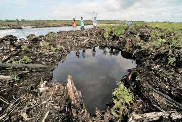 New trees a second chance for peatland farmers
