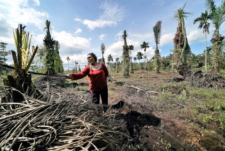 To be replaced: Poniyem points out her dead oil palms. She wants to grow plants that are more suitable to peatland.