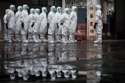 China confirms first human case of H7N4 bird flu