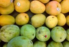 Indonesian mangoes, dragon fruit to enter Australian market