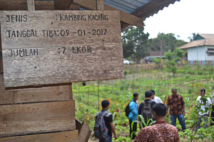 Free from chemicals: Farmers in Lembah Hijau 2 village in Nanga Tayap district, Ketapang regency, West Kalimantan, use compost and chemical-free insecticides for their crop fields.
