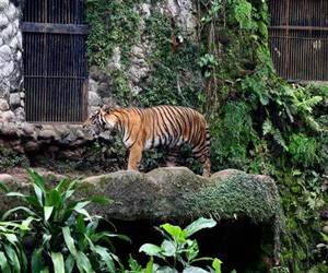 Jakpost guide to Ragunan Zoo