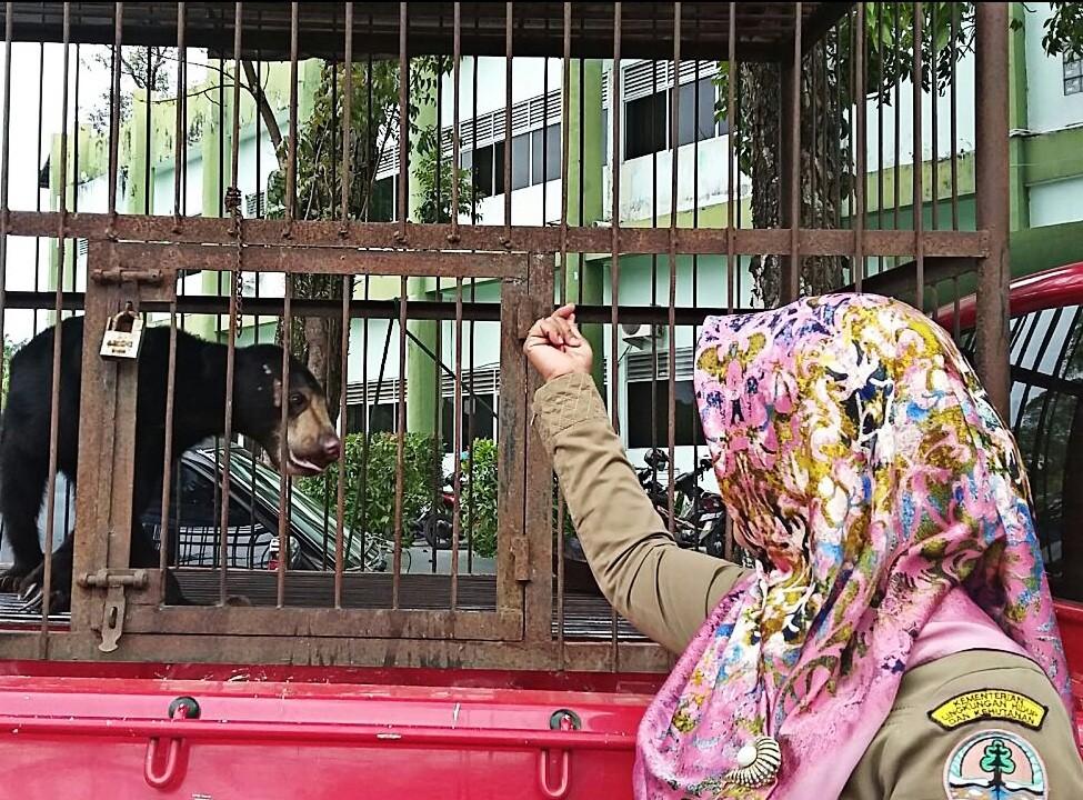 Police arrest 'killers' of Riau sun bears in viral video