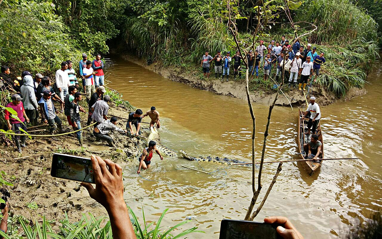 Man killed by crocodile in East Kutai