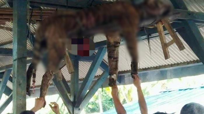 Local residents look at a dead Sumatran tiger hung in Hatupangan village, Mandailing Natal, North Sumatra, on Sunday morning. The tiger was allegedly killed by locals.