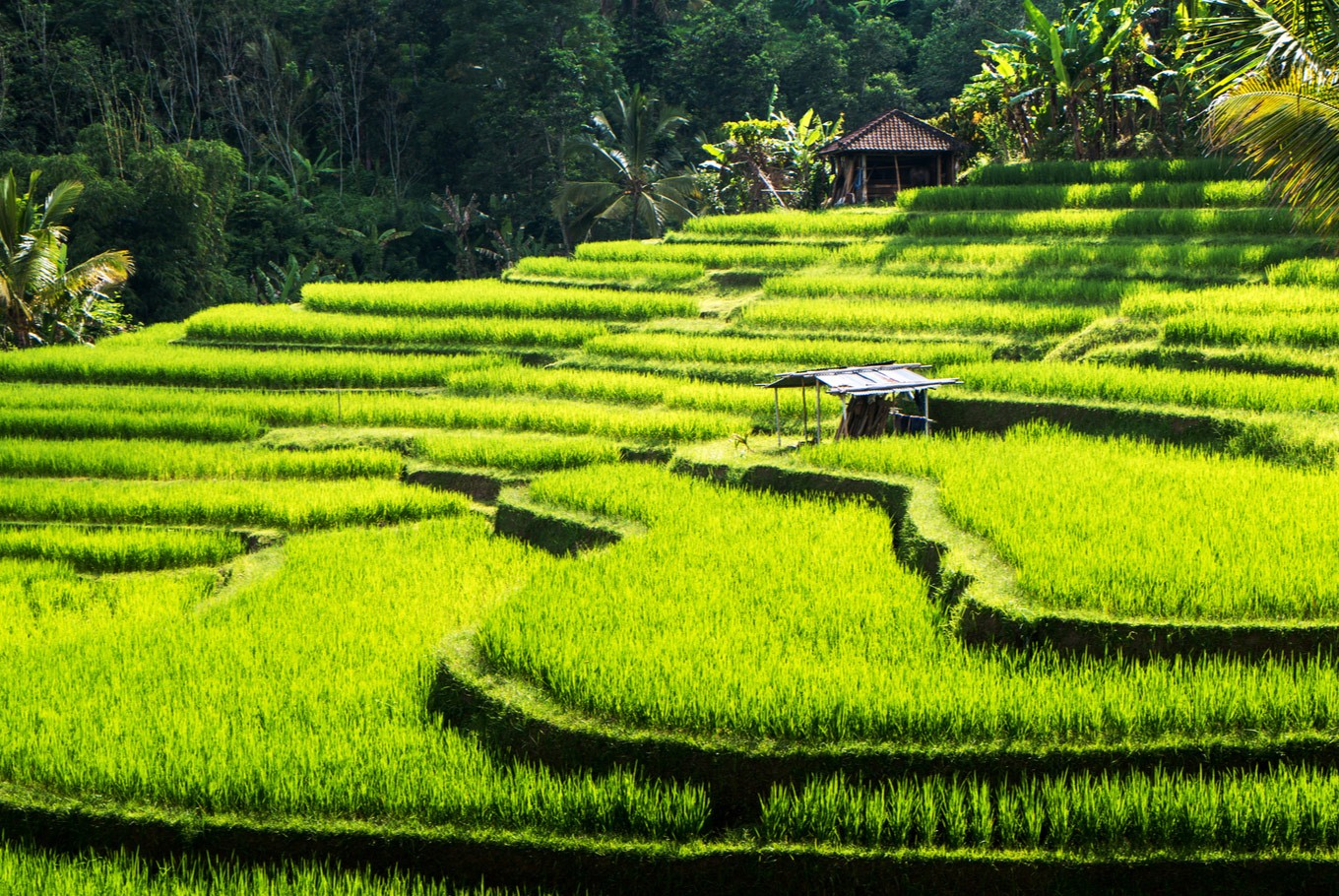Bali: A haven for addiction recovery