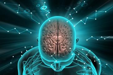 How human brains became so big