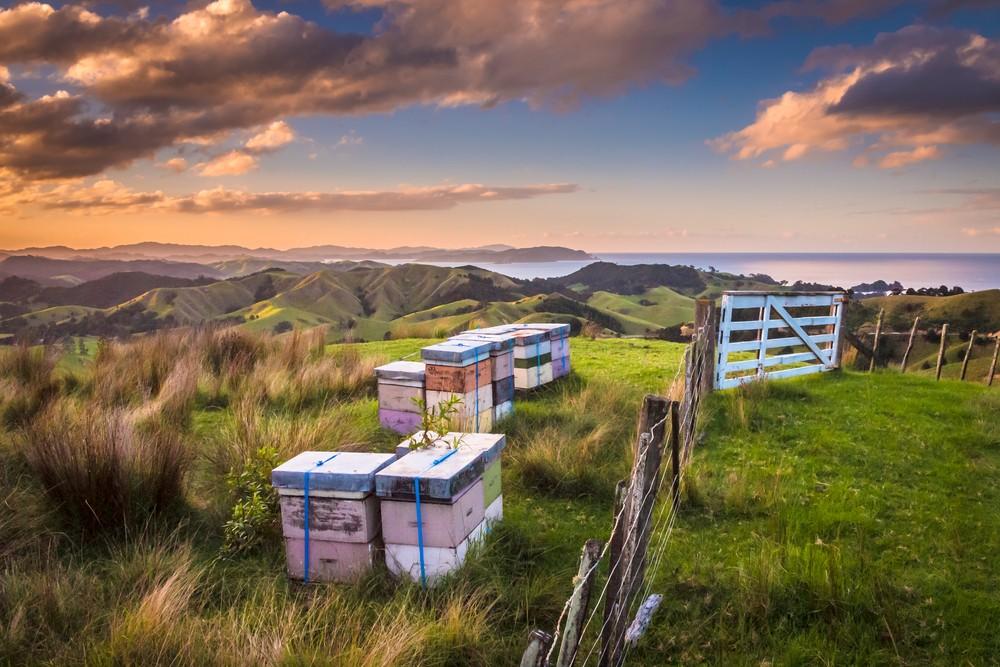 New Zealand renews halal food guide