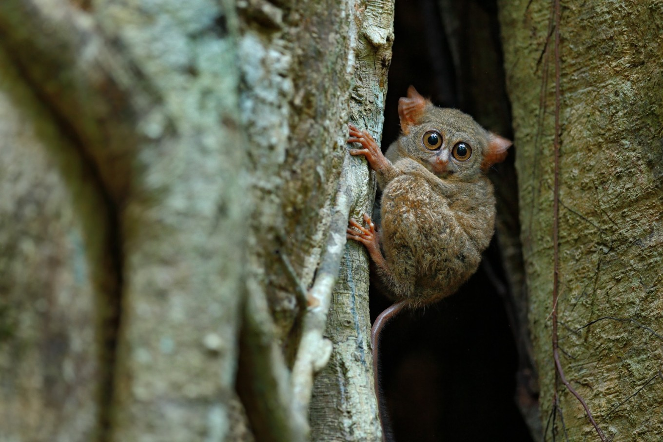 Photographer Riza Marlon launches a book on Indonesia's endemic species