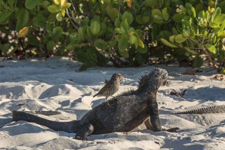 Tonnes of garbage cleaned up from Galapagos coast