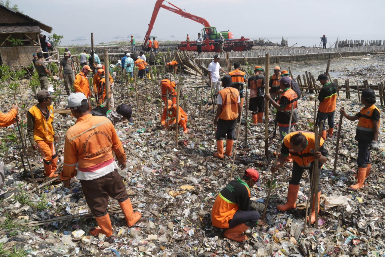 Half of sea of trash in North Jakarta mangrove area removed