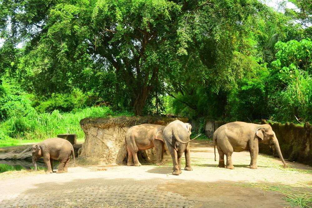 Bali Safari and Marine Park targets Chinese tourists