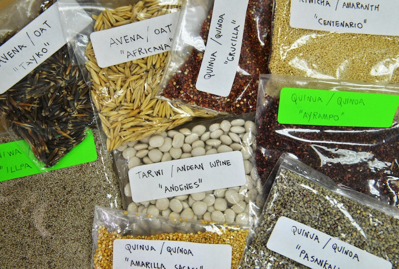 Overproduction threatens Andes superfood haven