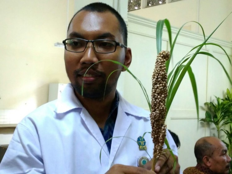 Green energy?: Arief Noor Rachmadiyanto, a researcher with Bogor Botanical Gardens' plant conservation center, shows sorghum and cogon grass to journalists at a press conference in Bogor, West Java, on Wednesday.