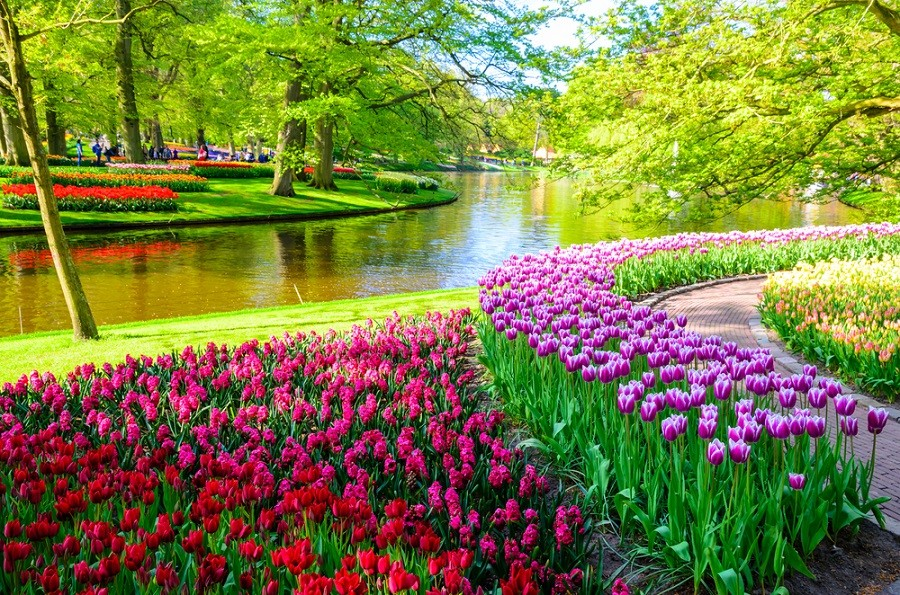 Take a virtual tour of world famous tulip gardens in the Netherlands