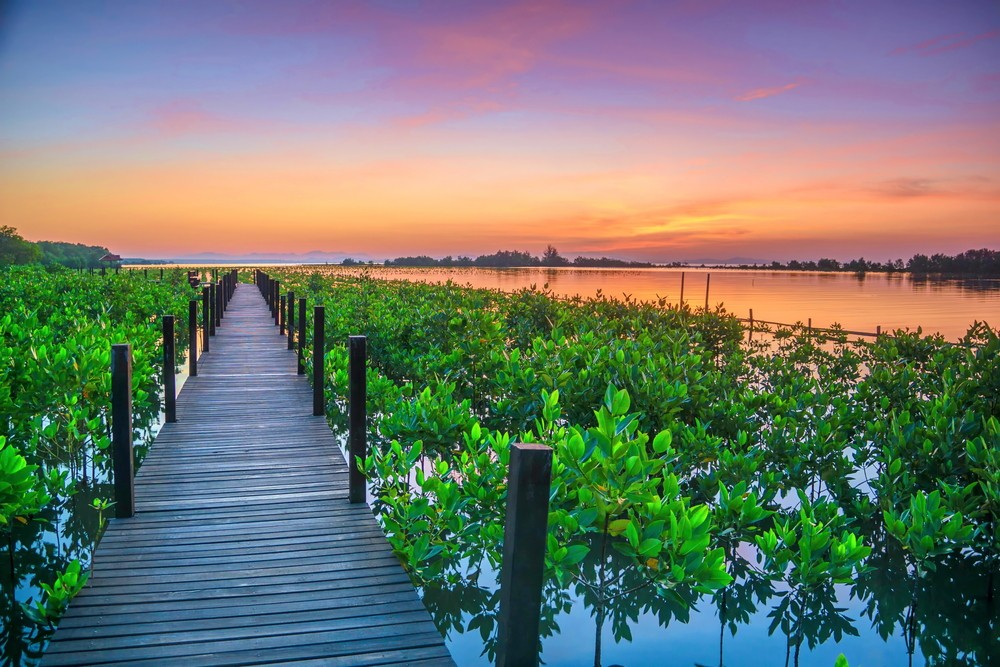 Bunaken to present mangrove tourism on Mantehage island