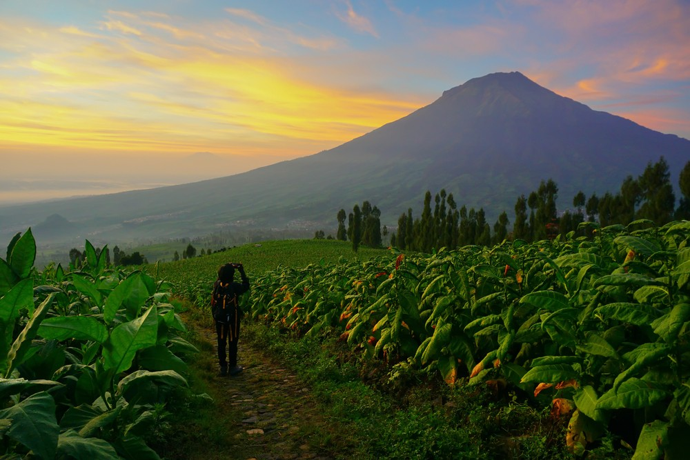 Mount Sumbing in Central Java to reopen to hikers