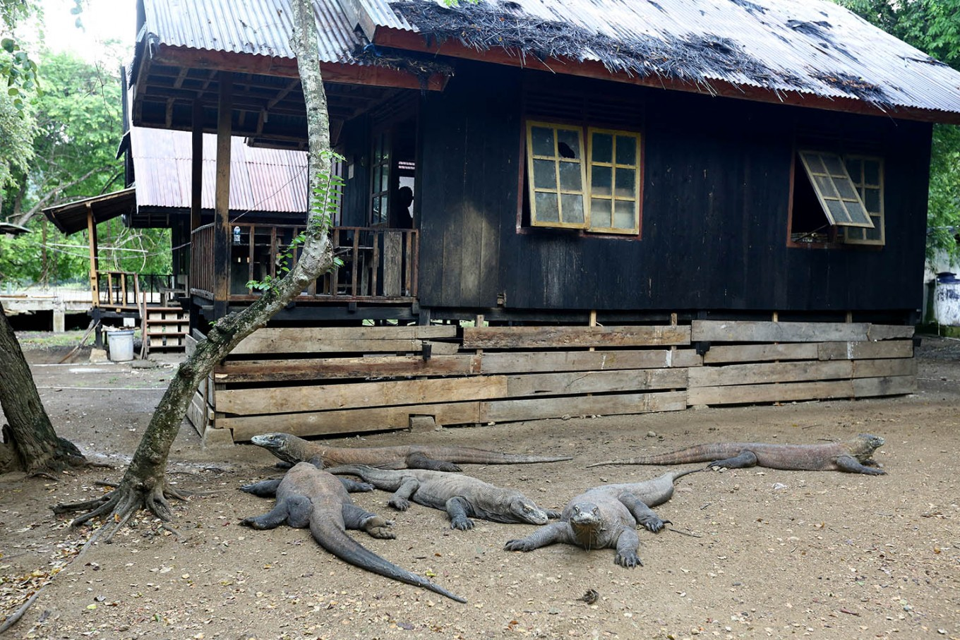 Project in Komodo park to support tourism: Environment ministry