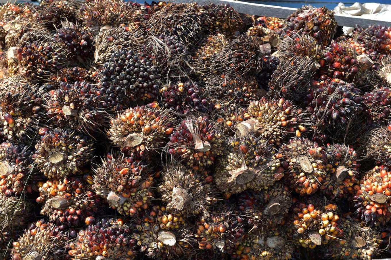 EU bases planned palm oil restriction on 2015 data