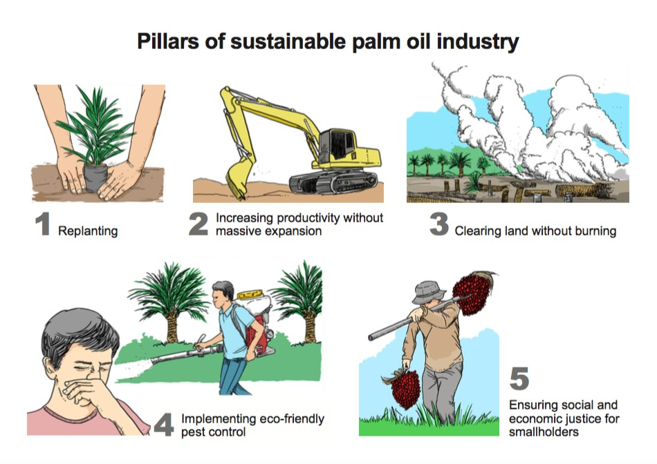Independent oil palm smallholders neglected in sustainability effort