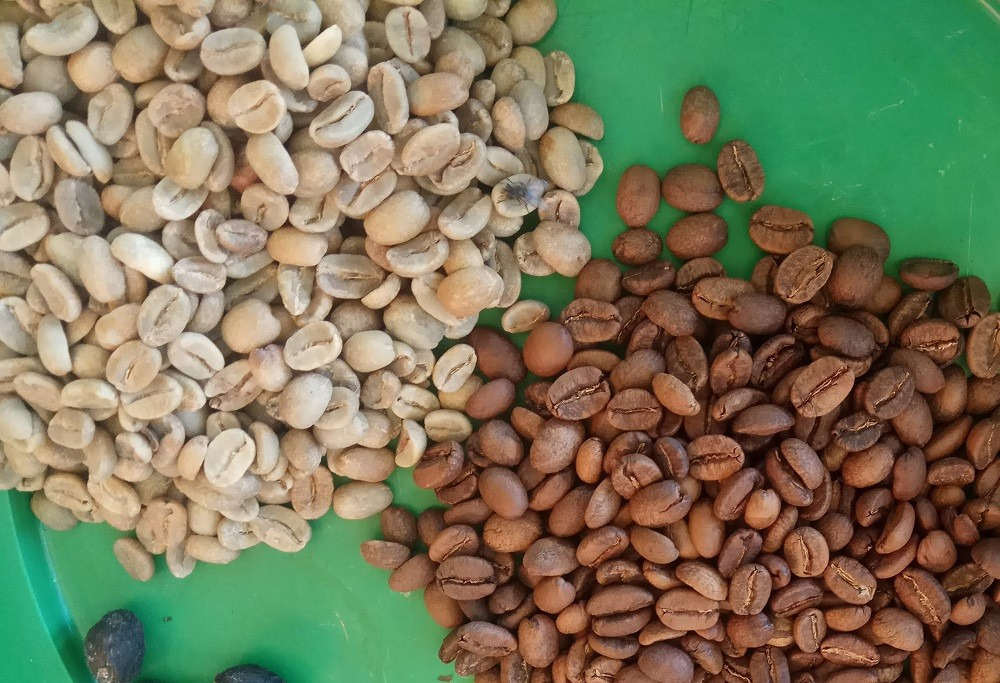 Green and roasted Lencoh coffee beans.