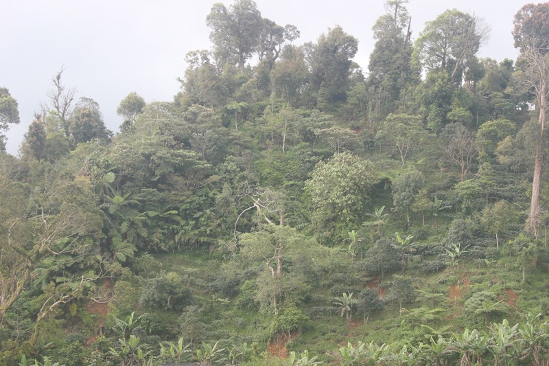 The Cibulao forest, which is becoming free of illegal logging.