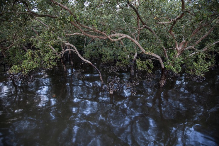 The mangrove forest is contaminated by oil spill in Kariangau village, Balikpapan Bay, East Kalimantan. An oil spill off Balikpapan Bay in Borneo island that led to five deaths and the declaration of a state of emergency, was caused by a burst undersea pipe belonging to Indonesia's state oil company Pertamina. Photo taken on April 5, 2018.