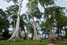 Under the tree: The Pohon Purba (Ancient Trees) tourist spot in Pringgabaya, East Lombok, West Nusa Tenggara, is popular among single people who wish to meet their soulmate. JP/ Tarko Sudiarno