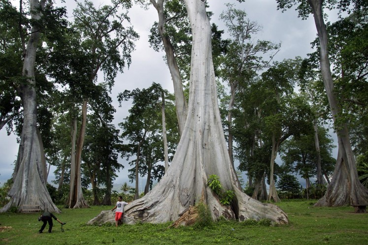 Trees of love for visitors of East Lombok