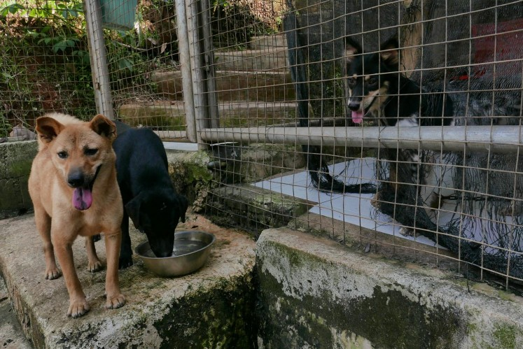 Three dogs socialize at Garda Satwa Indonesia.