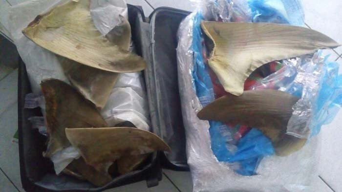 Suspected shark fin smugglers arrested at Soekarno-Hatta